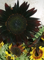 Rustic Sunflower Arrangement